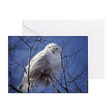 Snowy White Owl, Blue Sky Greeting Card