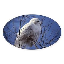 Snowy White Owl, Blue Sky Decal