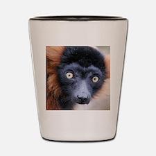 Red Ruffed Lemur Woven Blanket Shot Glass