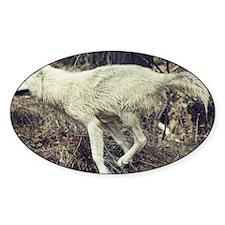 """Running  Arctic  Wolf"" Decal"