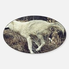 """Running  Arctic  Wolf"" Decal"