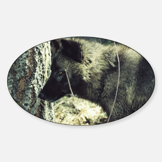 """""""Young  Black  Wolf"""" Sticker (Oval)"""