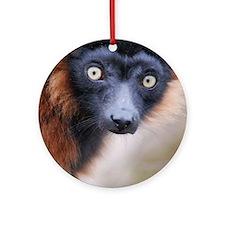 Red Ruffed Lemur Panel Print Round Ornament