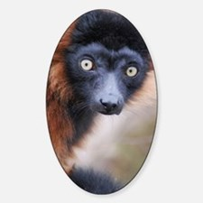 Red Ruffed Lemur iPad Mini Sticker (Oval)