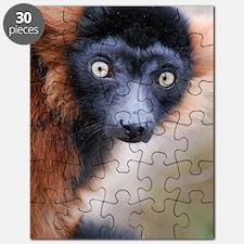 Red Ruffed Lemur Large Print Puzzle