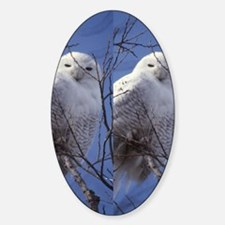 Snowy White Owl, Blue Sky Decal