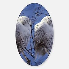 Snowy White Owl, Blue Sky Sticker (Oval)