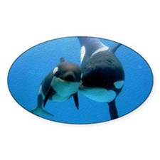 Orca With Calf Decal