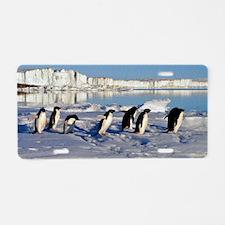 Penguin Place Aluminum License Plate