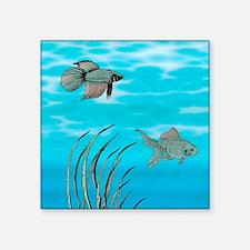 "Goldfish Square Sticker 3"" x 3"""