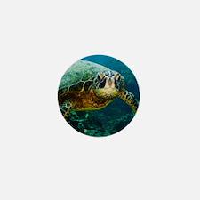 Sea Turtle Curiosity Mini Button