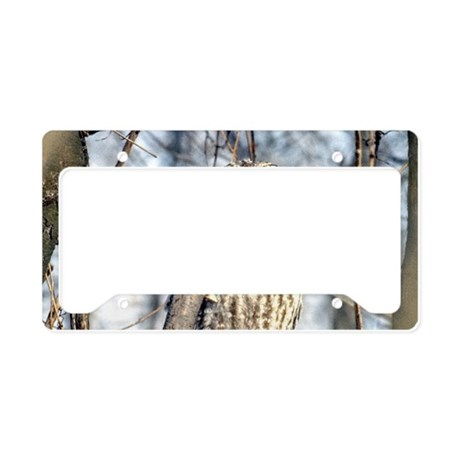 Great Gray Owl License Plate Holder