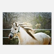 Paso Fino  Postcards (Package of 8)