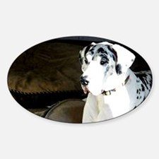 great dane, dog, harlequin Sticker (Oval)