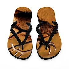 Big Wild Elk Flip Flops
