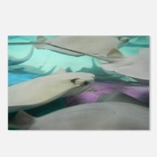 manta rays Postcards (Package of 8)