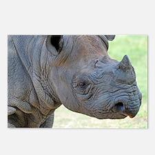 Black Rhino Panel Print Postcards (Package of 8)