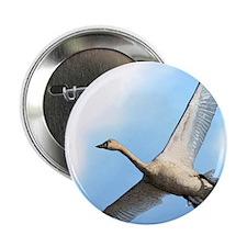 "Tundra Swan 2.25"" Button"
