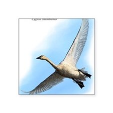 "Tundra Swan Square Sticker 3"" x 3"""
