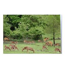 Deer Postcards (Package of 8)