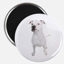Cute Pit bull mom Magnet