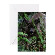 Hello, Buck Greeting Card