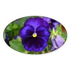 Pansy Decal
