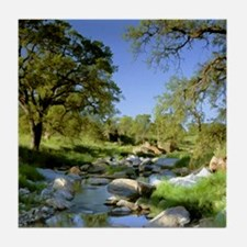 Countryside Creek and Trees Tile Coaster