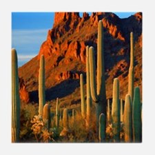 Arizona Desert Saguaro Cactus and Mou Tile Coaster
