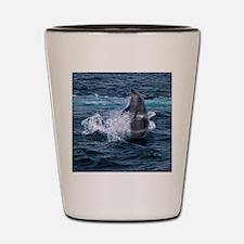 Hula-hoop Dolphin Shot Glass