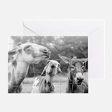 Love Me Some Donkeys Greeting Card