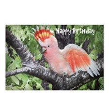 Major Mitchells Cockatoo Postcards (Package of 8)