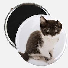 Cute Tuxedo Kitten Magnet