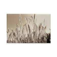 Golden hour reeds Rectangle Magnet