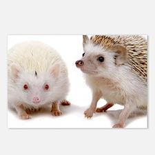rosie Hedgehog Postcards (Package of 8)