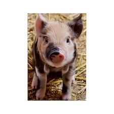 This Little Piggy Rectangle Magnet