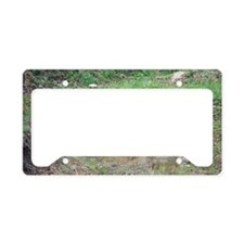 """""""Keeping  Cool"""" License Plate Holder"""
