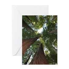 California Giant Redwoods Greeting Card