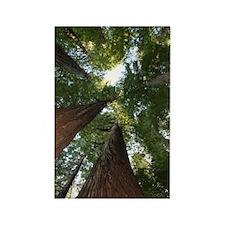 California Giant Redwoods Rectangle Magnet