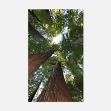 California Giant Redwoods Decal