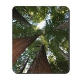 Redwoods Mouse Pads