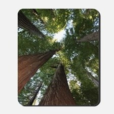 California Giant Redwoods Mousepad