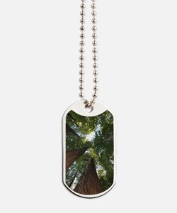 California Giant Redwoods Dog Tags