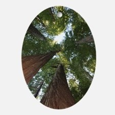 California Giant Redwoods Oval Ornament