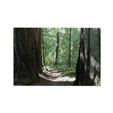 Trail - California Giant Redwoods Rectangle Magnet