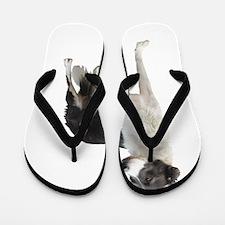 Cute Border collies Flip Flops