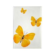 Apricot Sulphur Butterflies 3 Rectangle Magnet