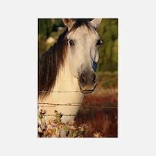 The White Stallion Rectangle Magnet
