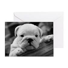 Bulldog Puppy Greeting Card