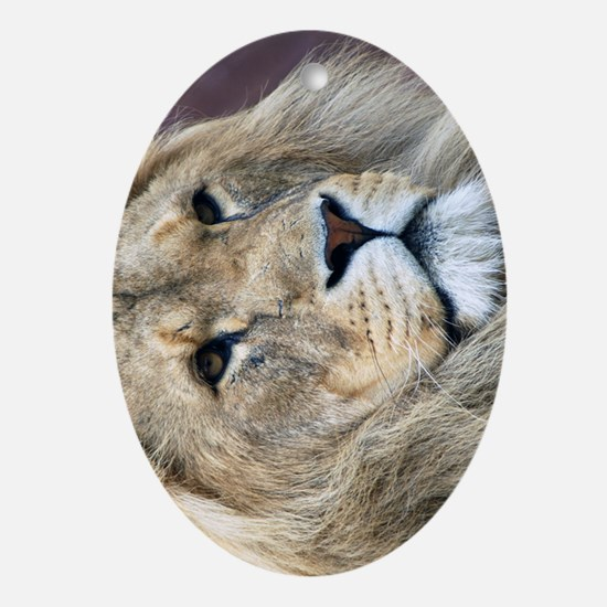 Lion iPhone 3G Oval Ornament